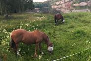 horses_karr